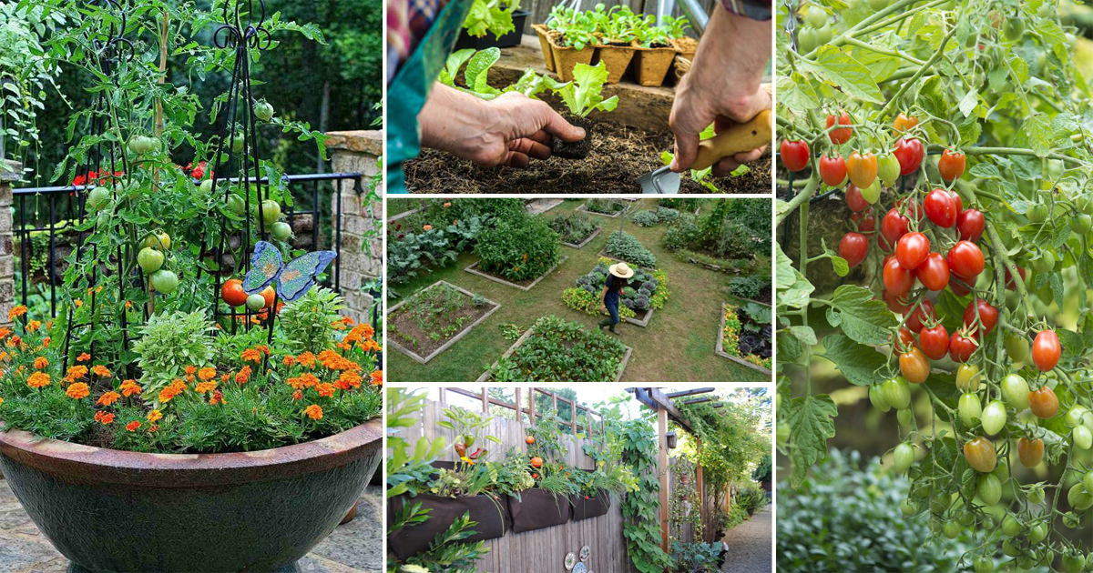 12 great tips for starting a kitchen garden every beginner should know! DQTGHPL