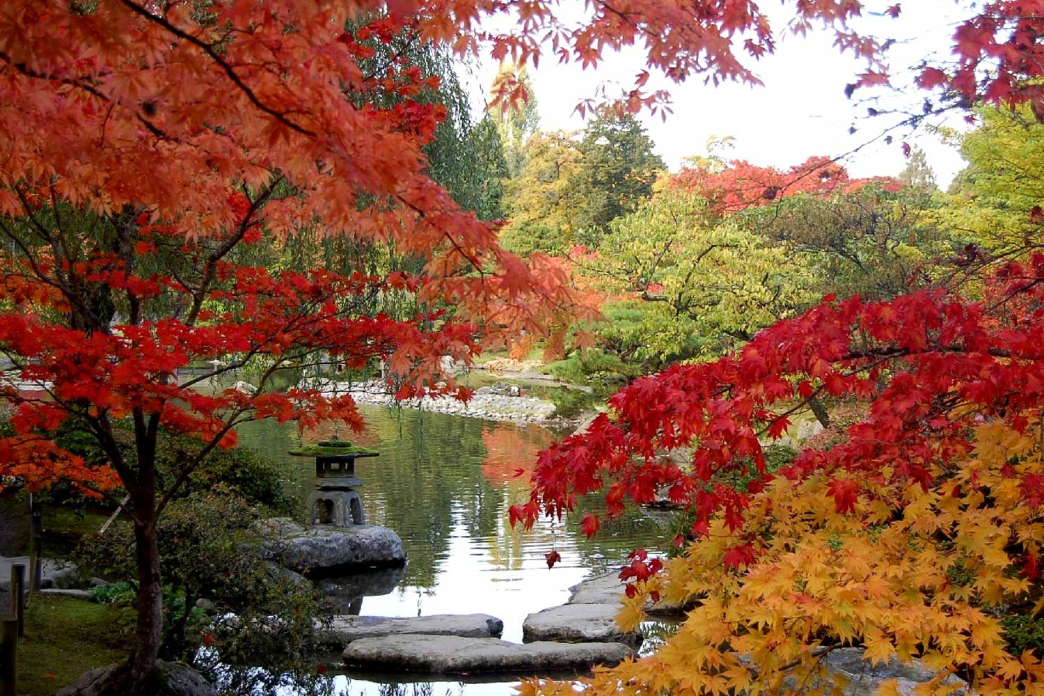 autumn at the seattle japanese garden LLCJZEP