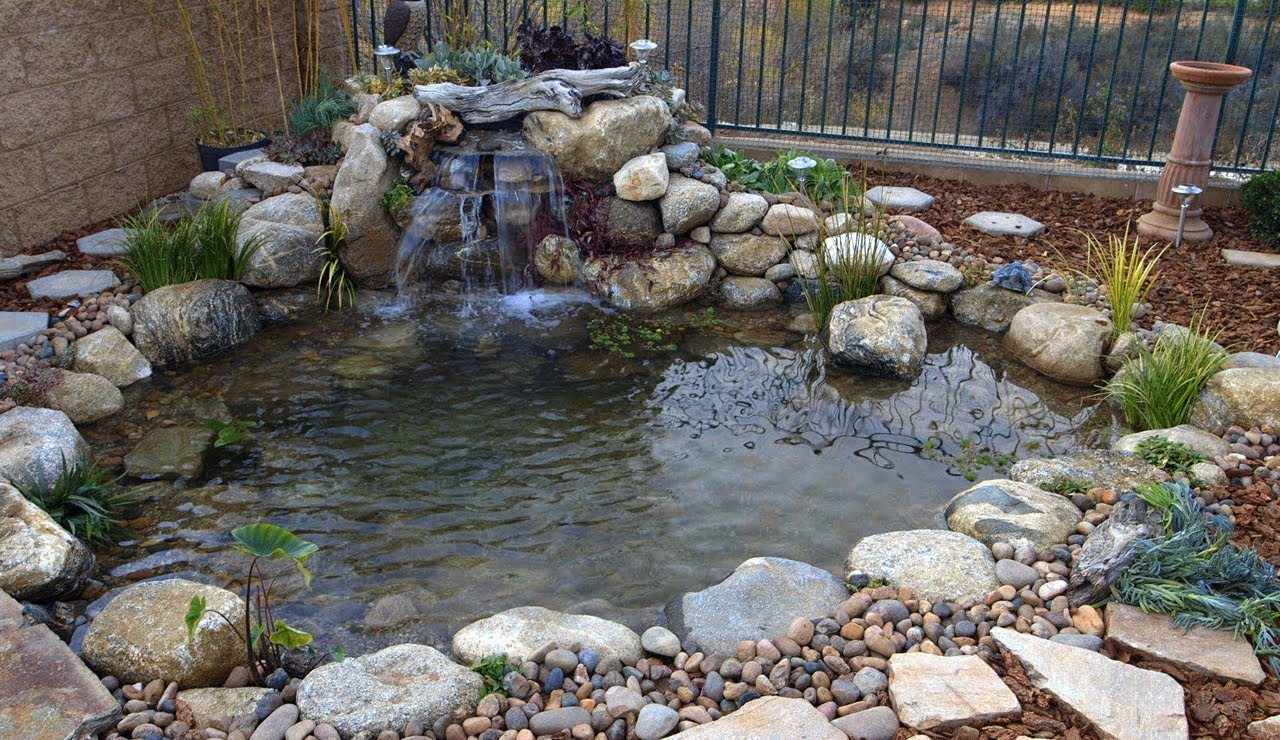 backyard pond ponds gone wrong | backyard ponds