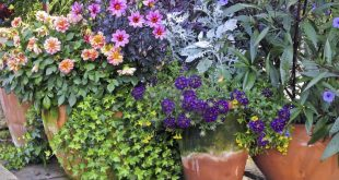 container garden arrangements: container gardening ideas and more