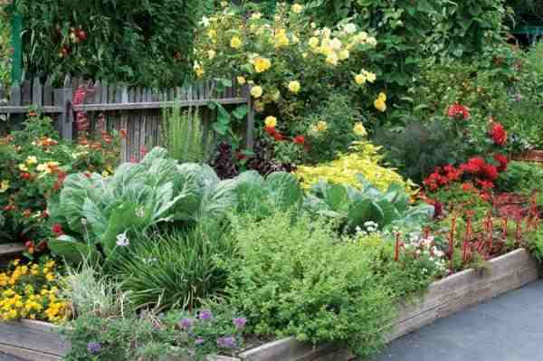 edible landscaping edible garden bed HYGEGWM