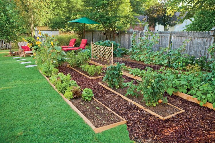 edible landscaping: how to eat your yard YFJJEII