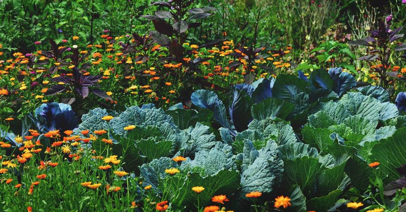 edible landscaping: how to start a beautiful perennial plot for food supply AOXROOR