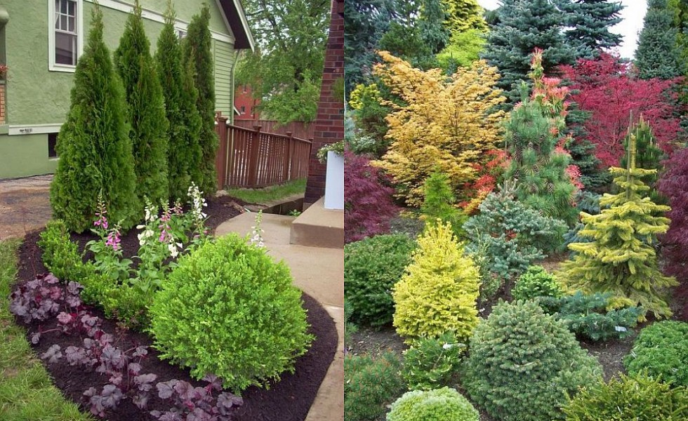 evergreen landscaping ideas - eternal oases ZPYMZAE