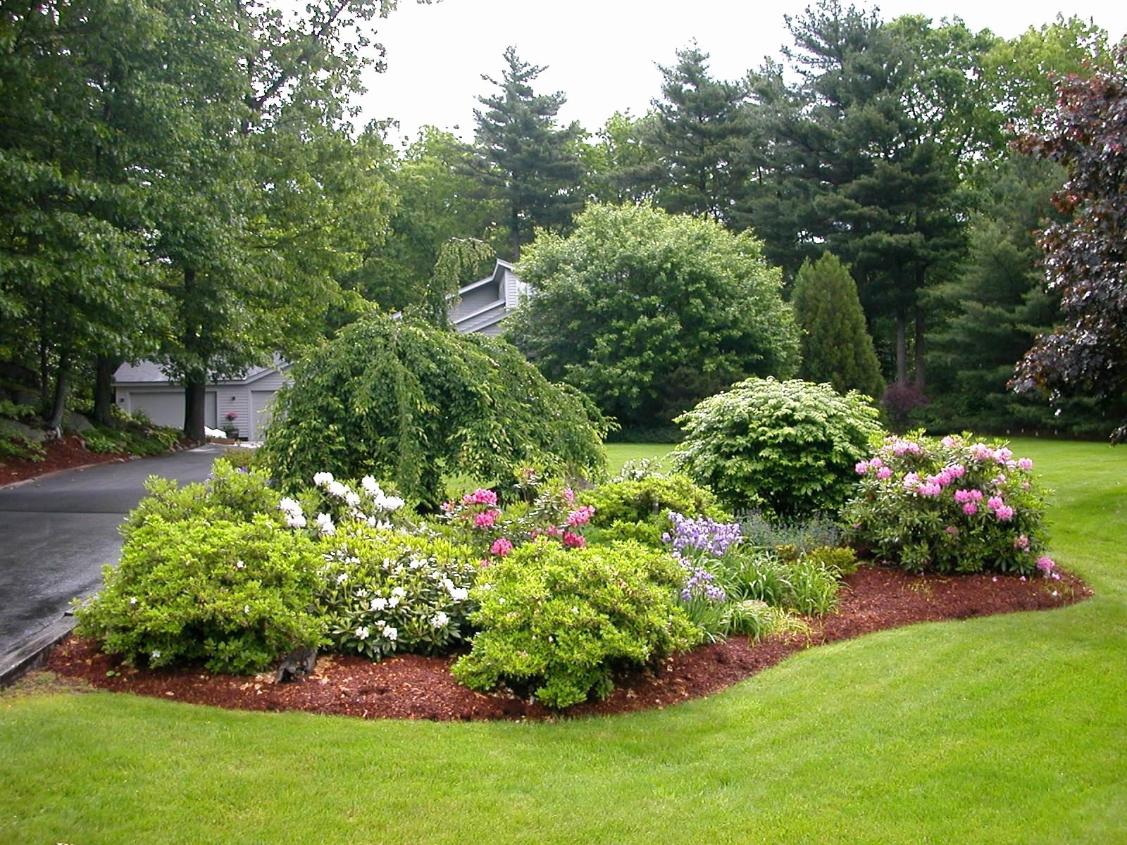 Reasons you should make the evergreen landscape your best choice