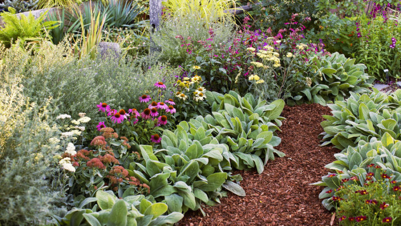 flower beds all-star perennials CLMVARS