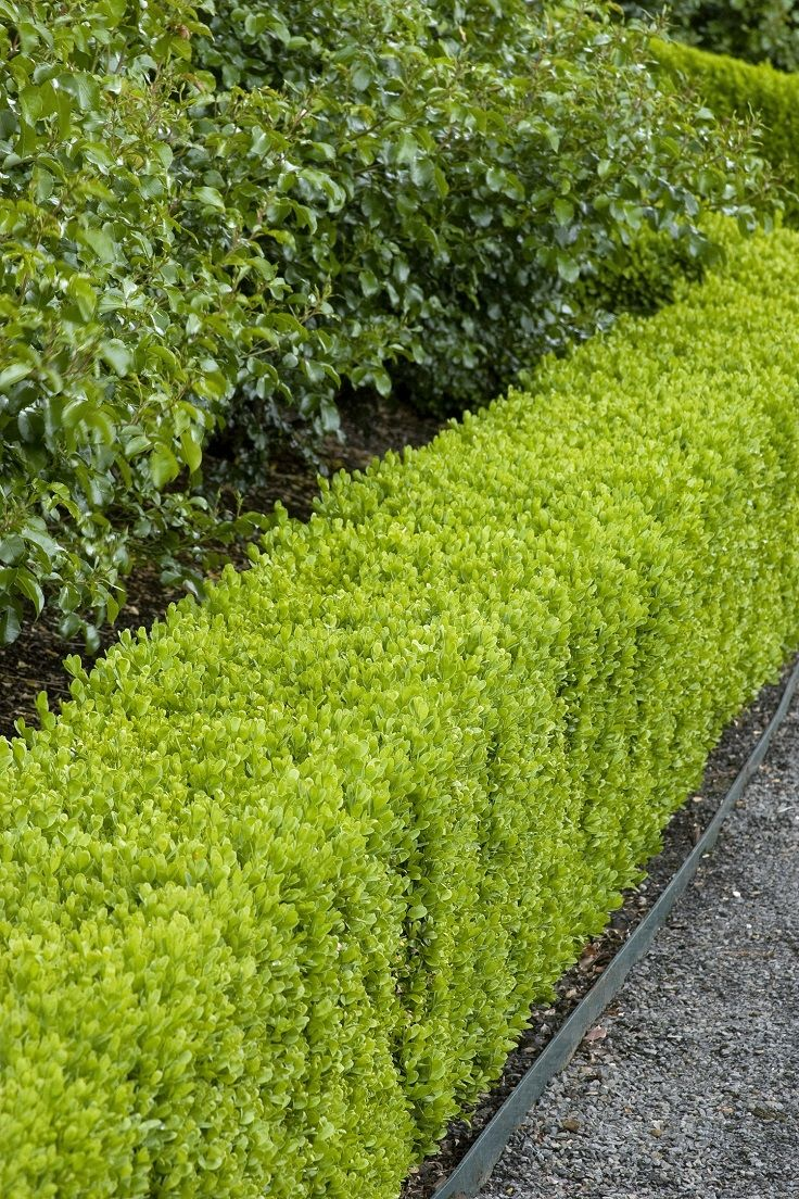 garden hedges if you are thinking about planting a new hedge and have doubts RHOXJNQ