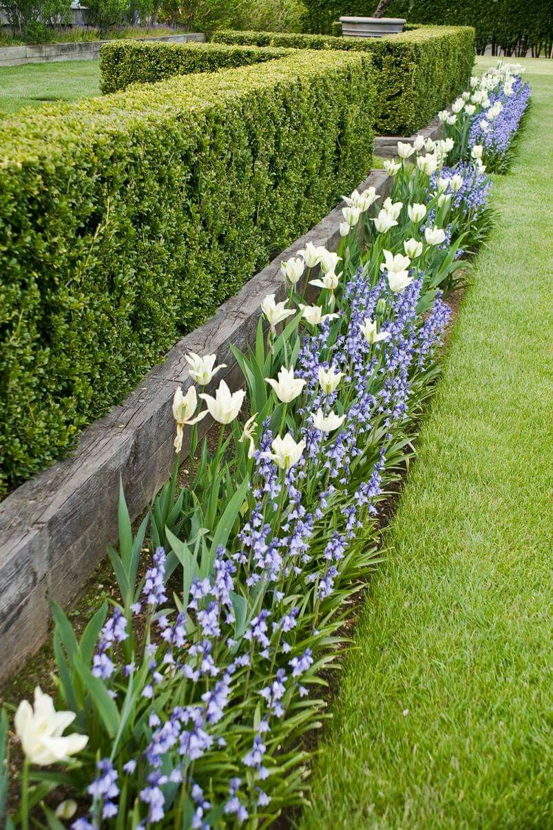 The Benefits of Garden Hedges