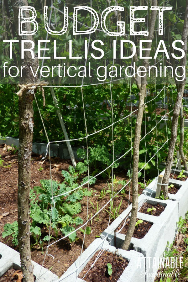 garden trellises growing vertically is a great way to make the most of a HKCAKOC