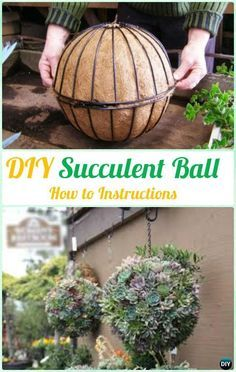 gardening ideas diy hanging succulent ball sphere planter instruction- diy indoor succulent garden CTNEFMI