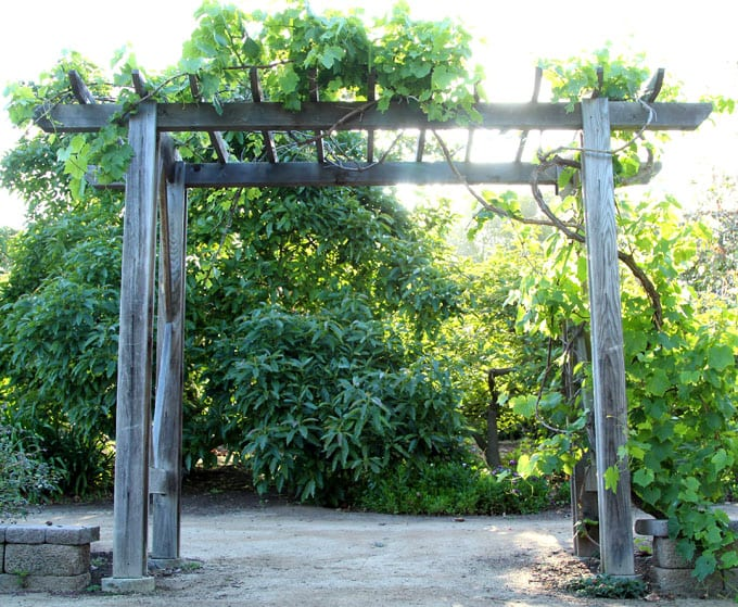 grape arbor free building plan for a gorgeous diy friendly arbor / pergola: it NWODDXX