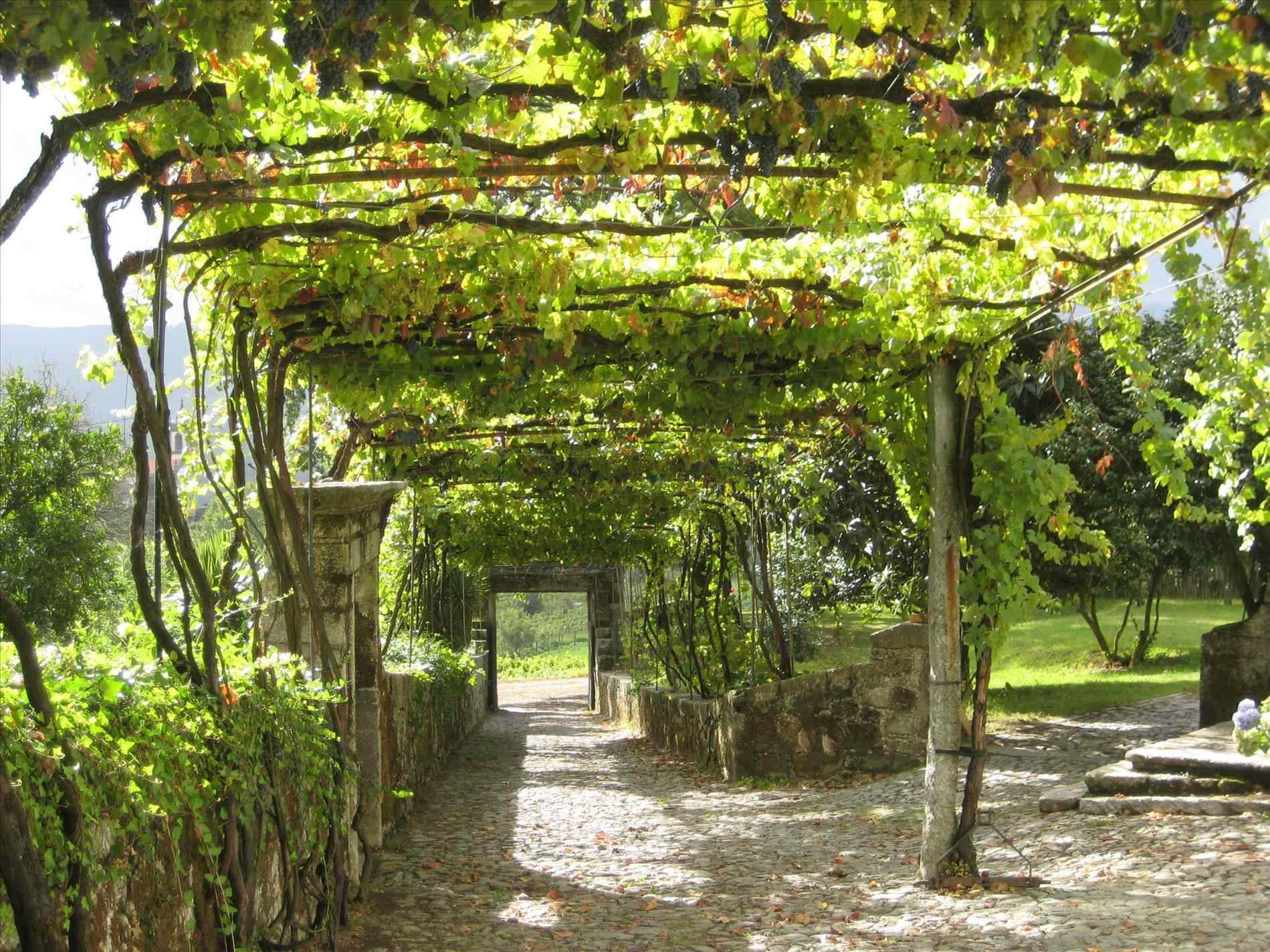 grape arbor plans free DEMIAWQ