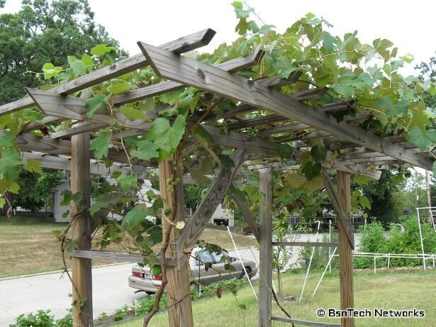 grapevine trellis designs | grape arbor designs steel strong end post SNVELEY