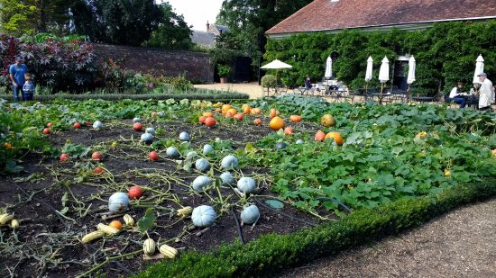 ham house: kitchen garden DHKPHUO