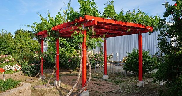 how to build a grape arbor - wooden grape arbor plan ideas MKRNQBX
