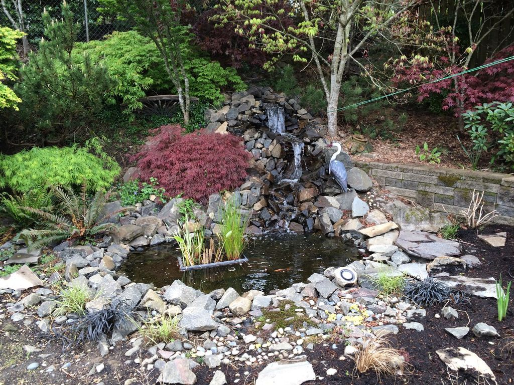 picture of backyard pond and waterfall: no experience