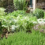 vegetable garden design how to plan a vegetable