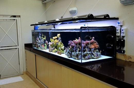 Best 200 gallon aquarium