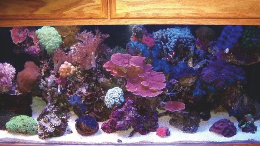 200 Gallon Aquarium – Maintenance Tips