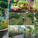 Kitchen Garden Or Bon Appetite
