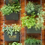 Why you must go for vertical garden