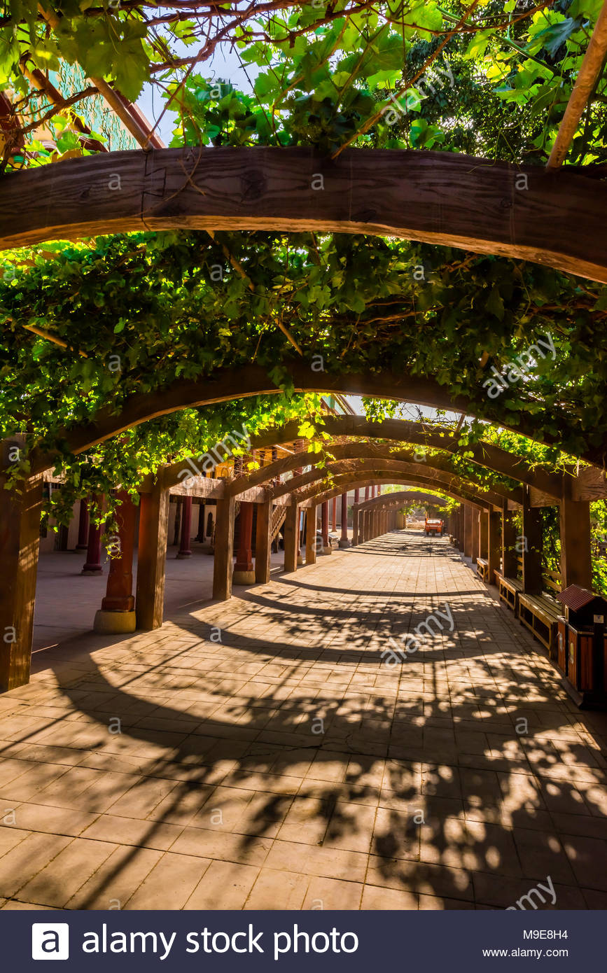 a grape arbor at the mansion of turpanu0027s prefect is next to WTBUANB