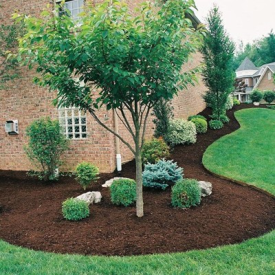 amazing of evergreen landscaping ideas evergreen landscaping for your  beautiful garden QPYHAED