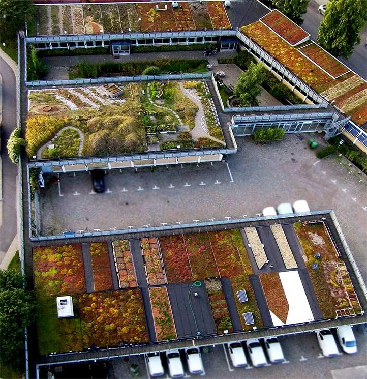 augustenborg botanical roof garden FQFYKIJ