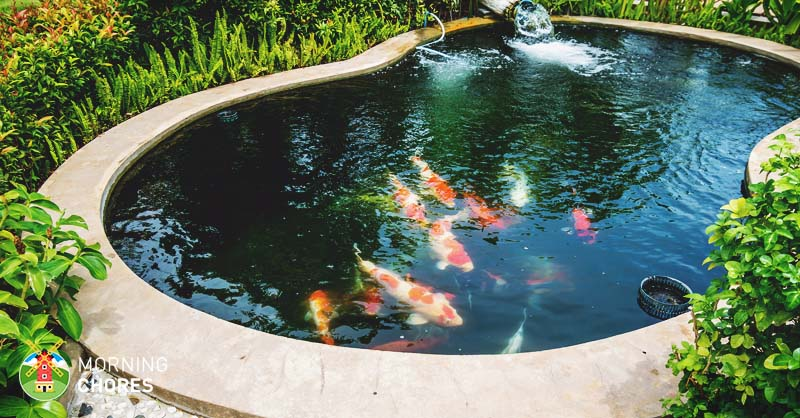 backyard pond 8 big reasons to build backyard ponds to improve your home QTMBJHY