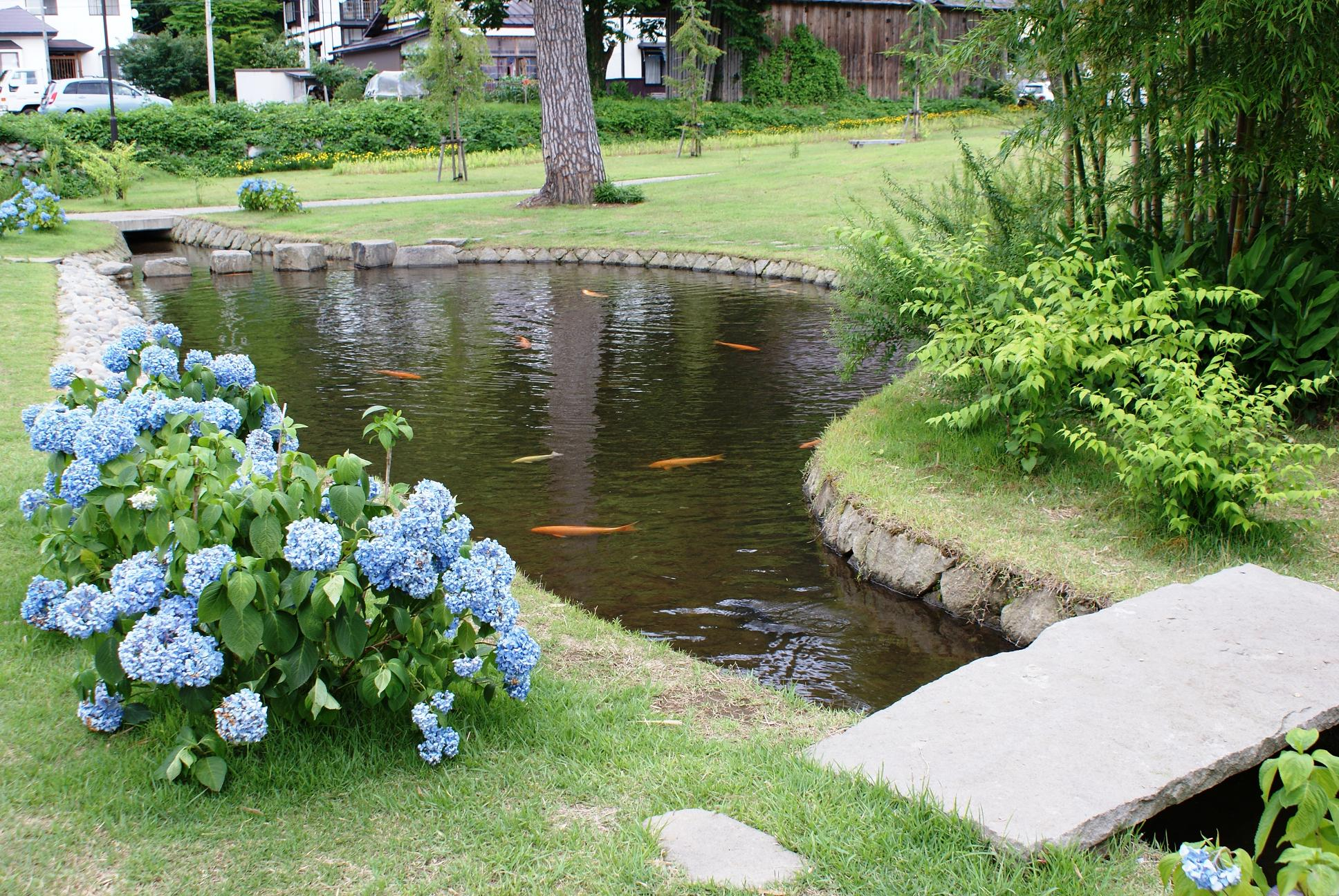 backyard pond backyard fish farming - raise fish in your home pond TFURNVT