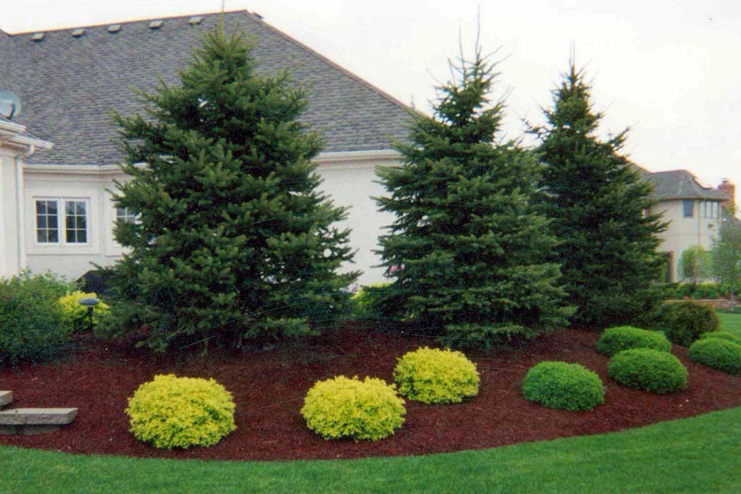 beautiful evergreen landscaping FYDYXLN