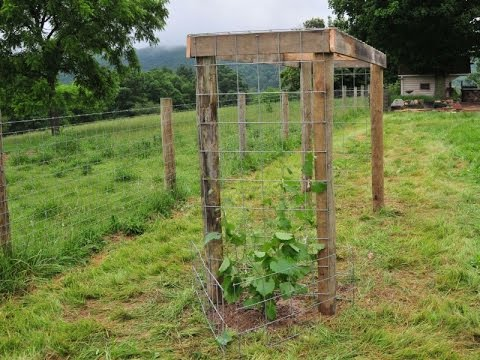 building a grape arbor HREDAYK