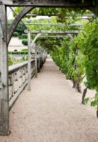 building a grape arbor NDWBECT