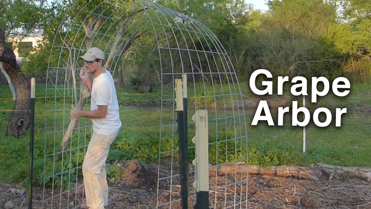 building the grape arbor trellis - cattle panels and t-posts PZZRHMU