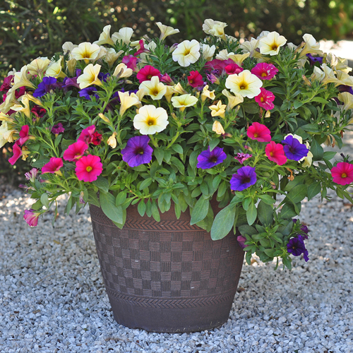 container gardening ideas 2: the power of one