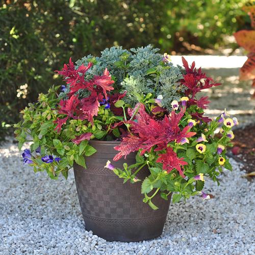 container gardening ideas 3: shady solution SKUPUWI