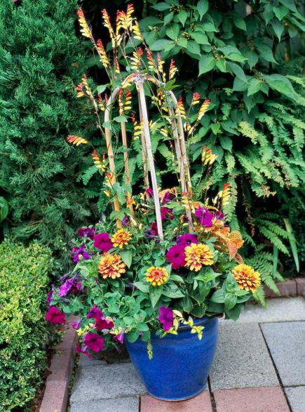 container gardening ideas vines so fine. vines can