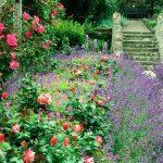 cottage garden image PBQWEYU
