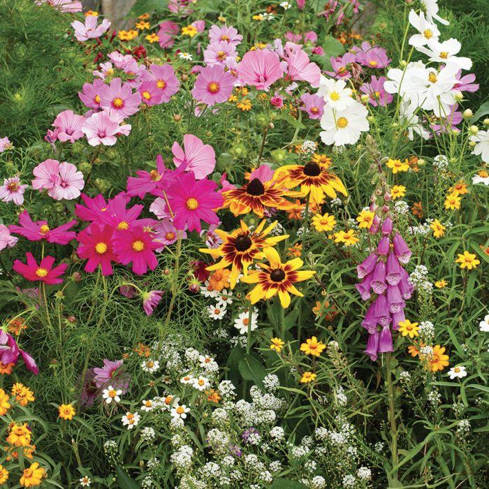 cottage garden mix wildflowers 3 RABMQHX