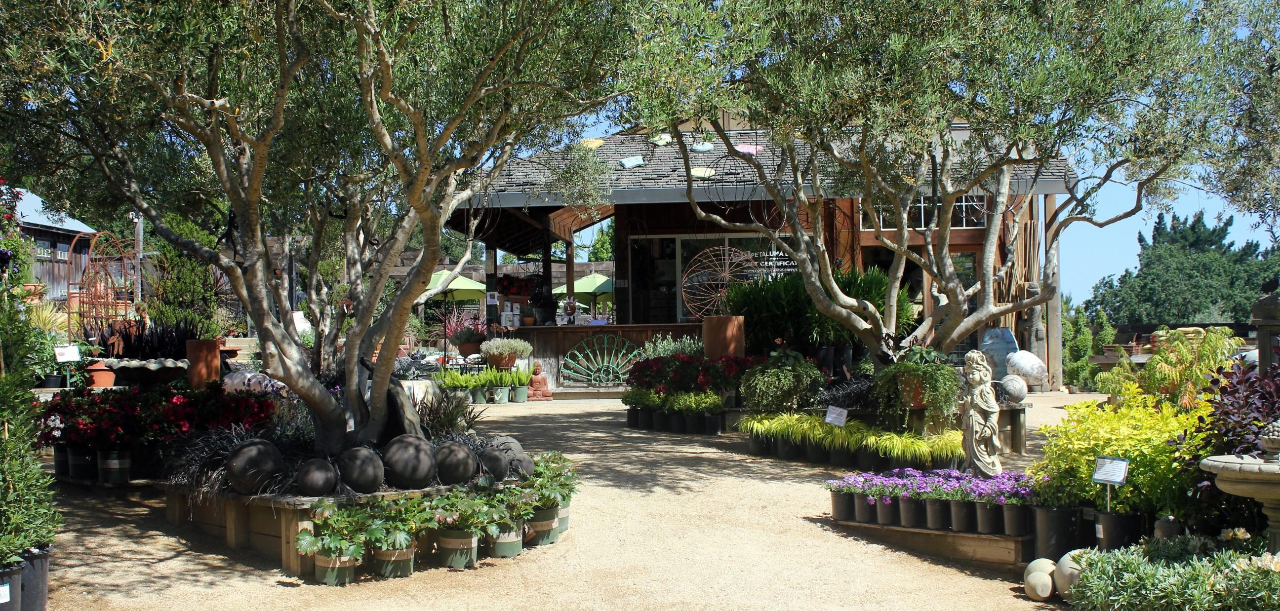 cottage gardens of petaluma JBQHCUC