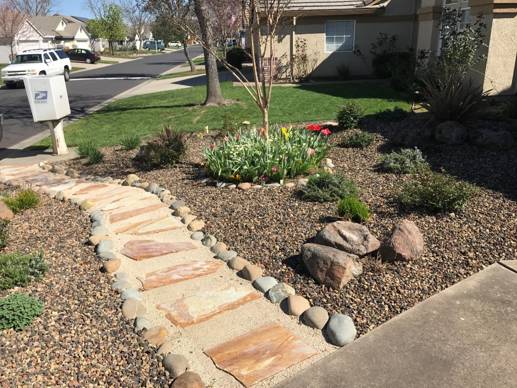 drought resistant landscaping cost of drought tolerant landscaping