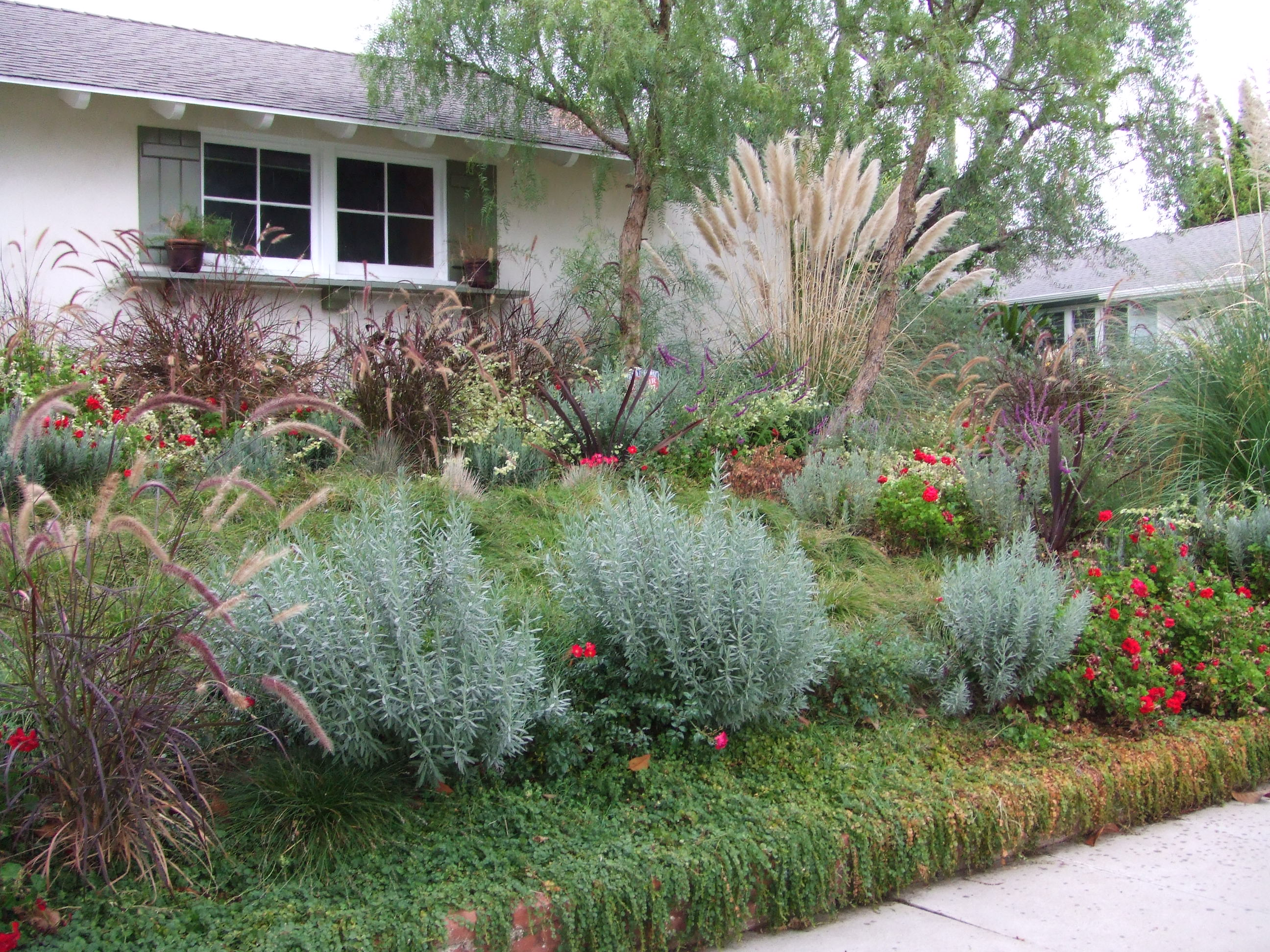 drought resistant landscaping drought resistant and native planting