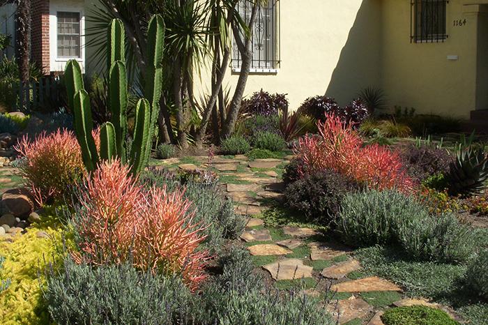 drought resistant landscaping ... drought tolerant landscape design
