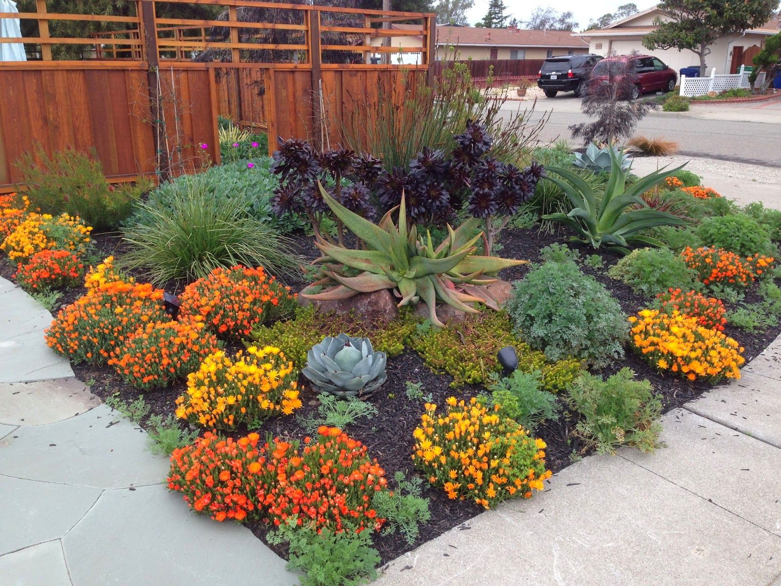 drought resistant landscaping wonderful drought resistant landscape ZEEQHUM