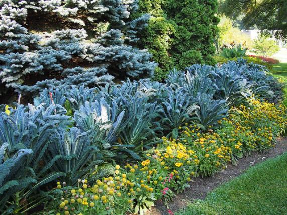 edible landscaping kale NYIGRNY