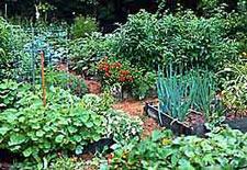 edible landscaping - vegetable garden design WJAQCIR