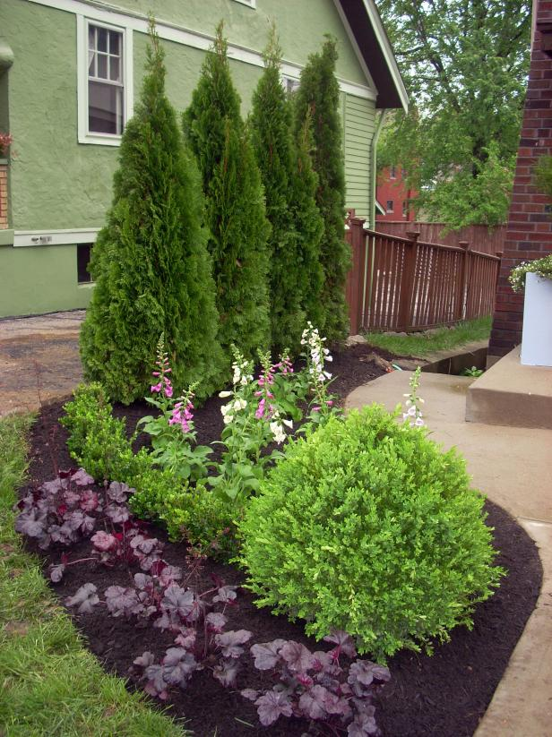 evergreen landscaping evergreen plants. year round screening plants for landscaping IFSHXHE