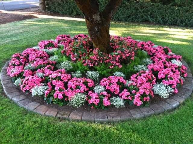 flower beds circular shade-loving annuals flower bed IDLNVHH