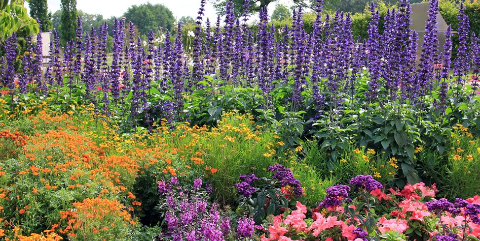 flower garden designs flowers, garden, purple spires garden design calimesa, ca ZKAHUGG