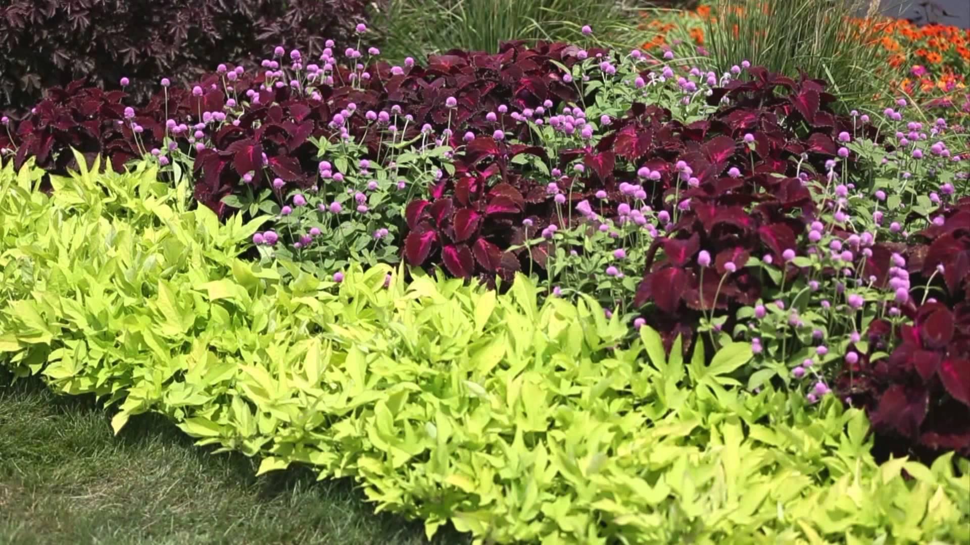 flower garden designs garden landscape - how to design a garden - youtube SVLBUEV